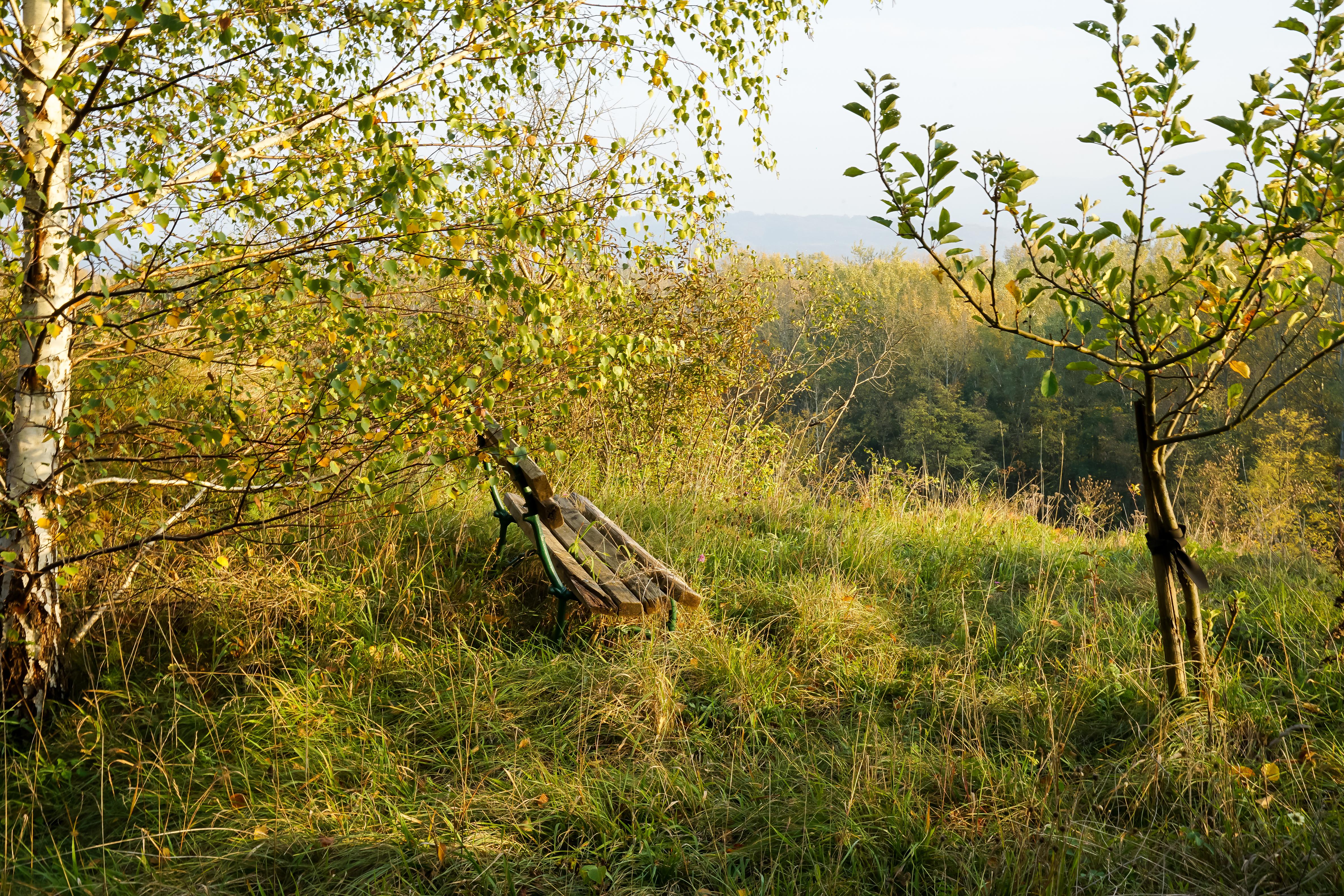 Herbstimpressionen Wachau