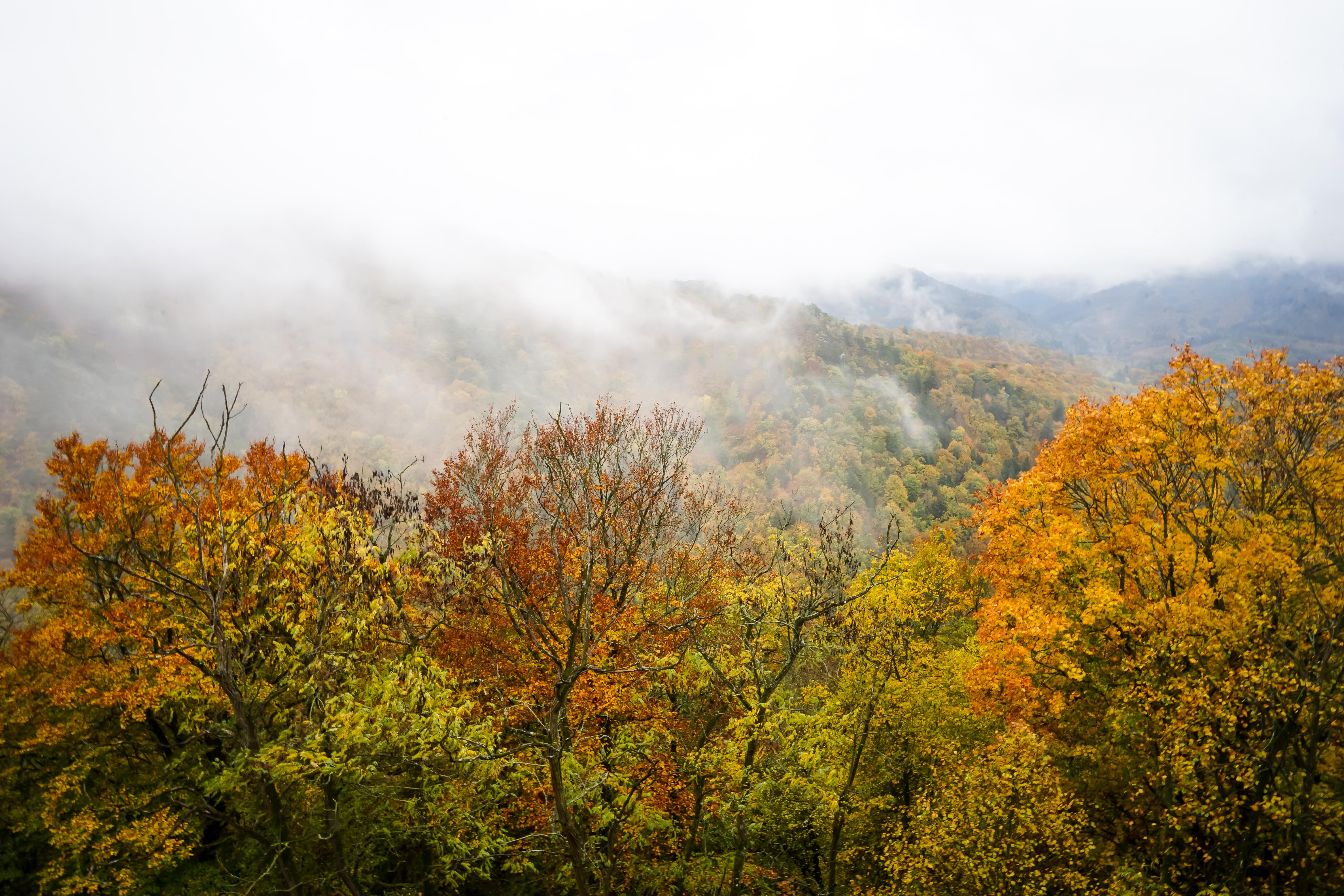 Herbstlicher Ausblick von der Burgruine Aggstein