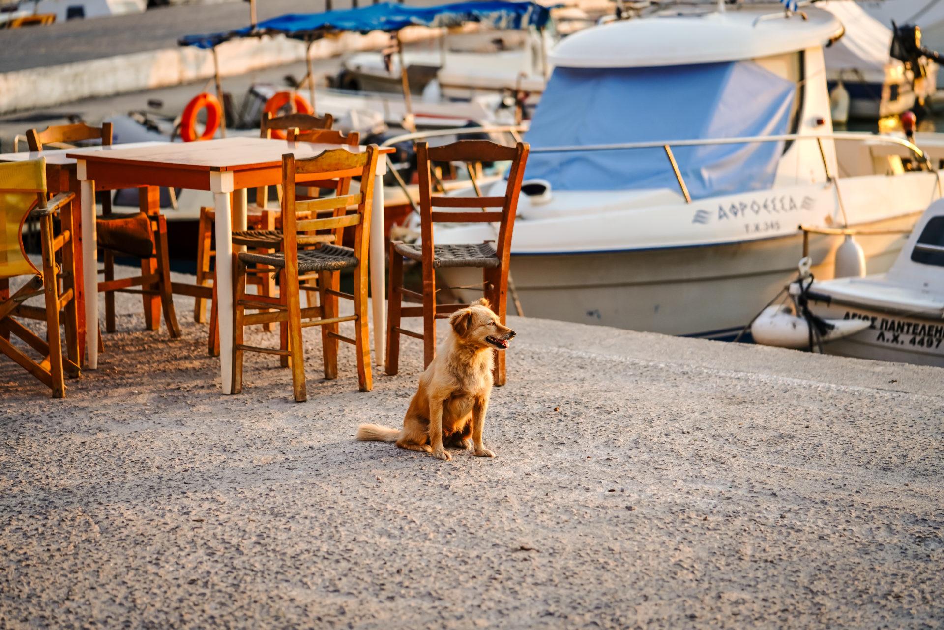 Hund Kreta