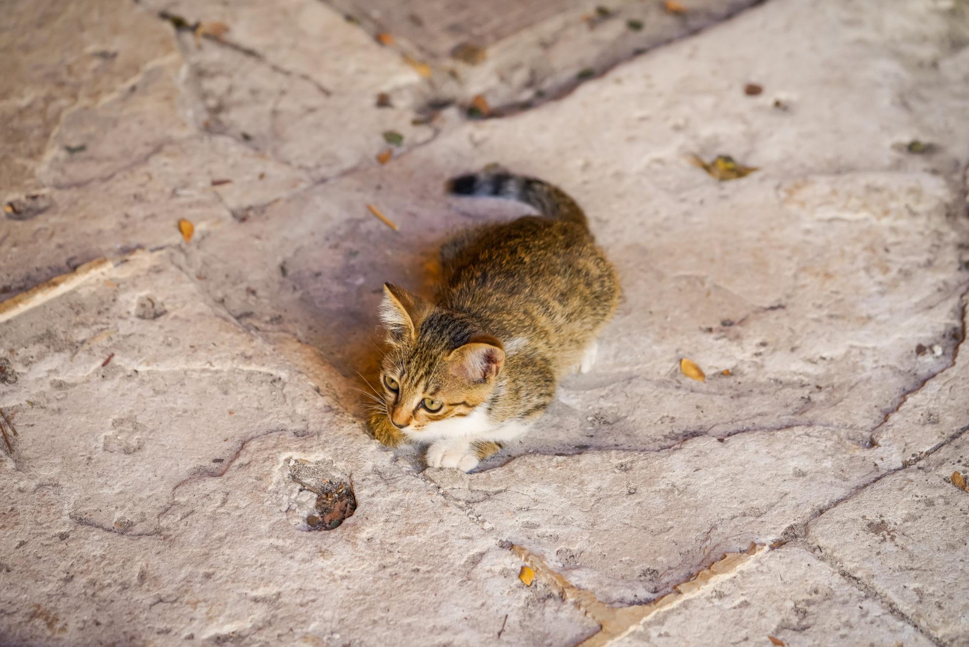 Katzen im Kloster Agia Triada